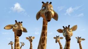 Zambezia_Giraffes